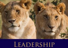 نظریه اسنادی رهبری